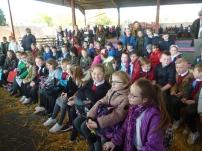 Watching the sheep shearing