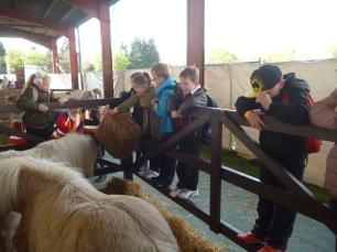 Shetland Ponies
